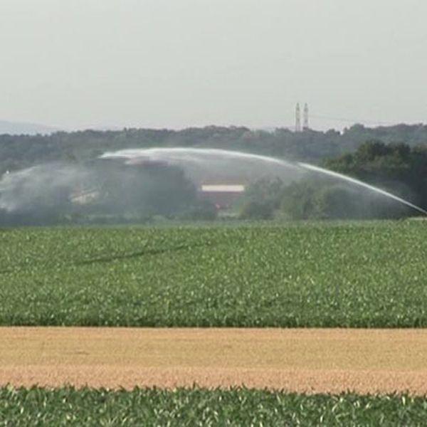 Impacts de l'agriculture intensive sur l'environnement