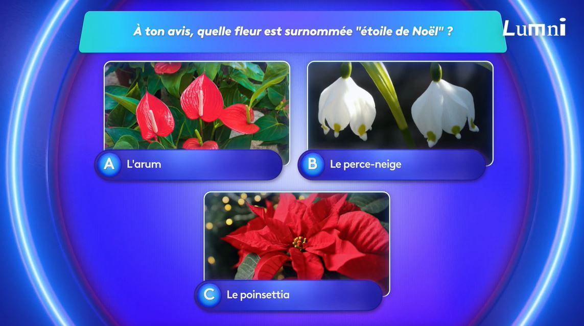 Une fleur porte le nom d'Etoile de Noël - le jeu Lumni avec Lisa et Phuc